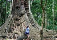 Rainforest QLD Australia