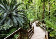 daintree-rainforest-walk