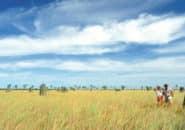 termite-mound1