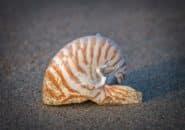 CSE Shell