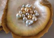 Pearls-from-Kazu-Pearl-Farm